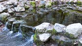 yosemite : The Famous Fern Spring at Yosemite National Park around February Stock Footage