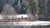 yosemite : Video of The Famous Merced river at Yosemite National Park around February