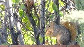 telephoto lens : Cute squirrel eating apple on the tree at the garden