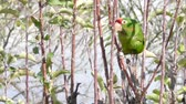 organismo : Beautiful parrot eating and playing on the tree at the garden