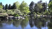 сосна : Japanese garden of Denver Botanic Gardens at Denver, Colorado, United States Стоковые видеозаписи