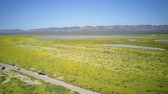 high plain : Bird eye view of the teautiful yellow goldifelds blossom at Carrizo Plain National Monument, California, U.S.A. Stock Footage