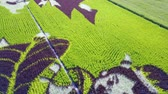 pintura : Aerial view of the beautiful Paddy field painting at Yuanli, Taiwan Stock Footage