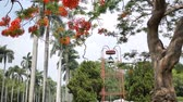 torre sineira : Taipei, MAY 22: Delonix regia blossom and bell tower of National Taiwan University on MAY 22, 2018 at Taipei, Taiwan Vídeos