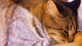 township : Close up shot of a cute cat sitting and resting at Yilan, Taiwan Stock Footage