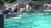 misja : San Diego, JUN 27: Cute Dolphin in the famous SeaWorld on JUN 27, 2018 at San Diego, California