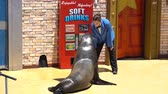 mise : San Diego, JUN 27: Sea Lion and Otter Stadium show in the famous SeaWorld on JUN 27, 2018 at San Diego, California