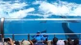 misja : San Diego, JUN 27: Killer whales shows in the famous SeaWorld on JUN 27, 2018 at San Diego, California Wideo