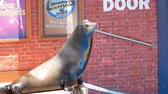misja : San Diego, JUN 27: Sea Lion and Otter Stadium show in the famous SeaWorld on JUN 27, 2018 at San Diego, California