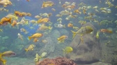 theme : Fish swimming in the Aquariums of the famous SeaWorld at San Diego, California Stock Footage