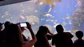 развлечения : Fish swimming in the Aquariums of the famous SeaWorld at San Diego, California Стоковые видеозаписи