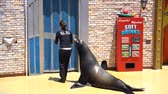 baía : San Diego, JUN 27: Sea Lion and Otter Stadium show in the famous SeaWorld on JUN 27, 2018 at San Diego, California