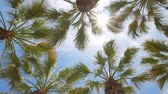 высокий : Looking up the palm tree with blue sky, photo took at Los Angeles Стоковые видеозаписи