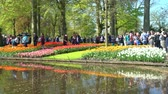 тюльпаны : Lisse, APR 21: Super colorful tulips blossom  on APR 21, 2018 at Keukenhof, Lisse, Netherlands