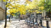 canadense : Toronto, OCT 8: Public bicycle and fall color on OCT 8, 2018 at Toronto, Canada
