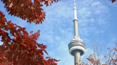 yukarıya bakıyor : Looking up the CN Tower with lovely red maple leaves at Toronto, Canada