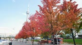kanada : Looking up the CN Tower with lovely red maple leaves at Toronto, Canada