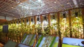 누각 : Taichung, DEC 22: Interior view of the Harvest Blessings Pavilion of Taichung World Flora Exposition on DEC 22, 2018 at Taichung, Taiwan