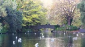 pato : Morning natural scene with bridge, lake, trees at St Stephens Green park at Dublin, Ireland Vídeos