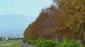 народный : Taxodium distichum in fall color with red, orange leaves at Yilan, Taiwan