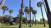 высокий : trees scene around Lacy Park at Los Angeles, California Стоковые видеозаписи