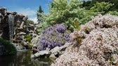 travel : Wisteria blossom in   Los Angeles, California