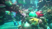 feeding fish aquarium : Las Vegas, DEC 29: Huge fish tank inside the Silverton Casino Hotel on DEC 29, 2019 at Las Vegas, Nevada Stock Footage