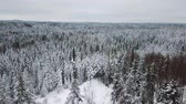 Flying fast above large forest in the cold winter Stock Footage