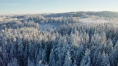 intocada : High flying camera tilt up over large frozen wood landscape in the cold winter