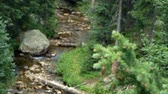 ladin : Focus moves from a spruce branch to a shallow wilderness stream or brook in Rocky Mountain National Park. Stok Video