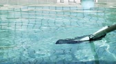 yüzme havuzu : slow motion cleaning a swimming pool with a net