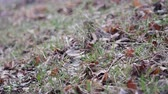 덮개 : Dry autumn leaves and blades of grass in a meadow in late autumn. Wind sways blades of grass and dead wood