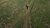 zaprášený : Biker rides enduro motorcycle on sandy road in green field, aerial shot Dostupné videozáznamy