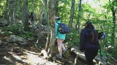 Hiking climbers with backpacks climbing the forest trail up into the mountains, back view Stock mozgókép