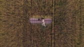 Top aerial view of young tired girl with wings and lying on the grass Stock mozgókép