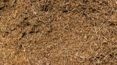 Time lapse of a anthill with many ants running