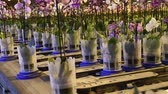 berçário : Honselersdijk, The Netherlands - January 5, 2018: Confeyer calling in a great modern orchid growing greenhouse in Westland, Holland. Vídeos