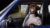 macaco : Angry vintage puppet monkey having a road rage freeway fit.