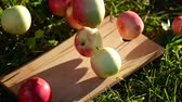 toranja : Apples falls and rolls on the grass against sunrise Stock Footage