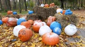 squash family : Painted pumpkins lie on the leaves in the park. End of Halloween concept