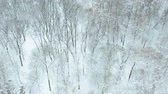 nyírfa : Fly over snow covered leafy park. Birds eye view Stock mozgókép