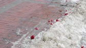 corazon partido : Petals from a bouquet of roses lie in the snow. People pass in the background. Failed date concept