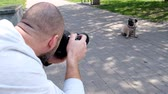 piada : Bearded photographer shoots a pug on a digital camera Stock Footage