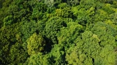 Fly over a green bushy forest at noon in summer. Aerial footage 4k Filmati Stock