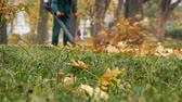 sottovuoto : Male worker blowing the autumn leaves with a leaf blower. Fallen leaves cleaning. Middle plan 4k
