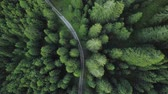 valle : A road discovered among the green trees of the forest from above