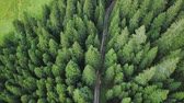 off road : Drone flies over a road through the green trees of the forest
