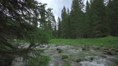 течь : A strong current of water flows between the boulders of nature and in the middle of the green pine trees Стоковые видеозаписи
