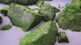 pedregulhos : Stones covered by green mold on the beach sand Stock Footage