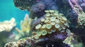 água salgada : Underwater World of Coral Reef